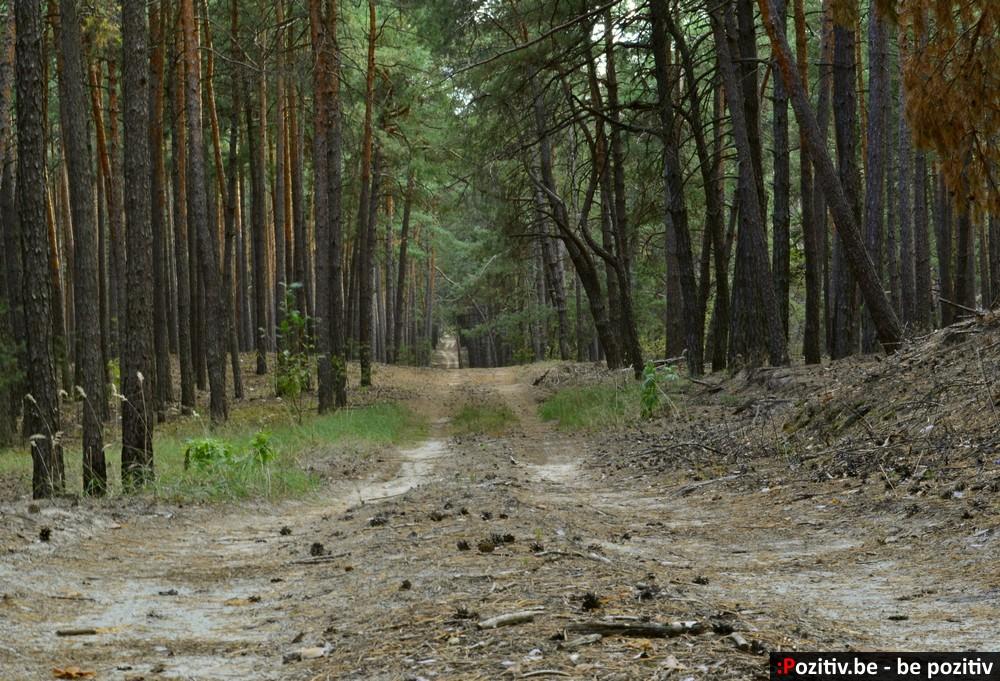 Ахтырский лес