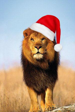 Лев в новогодней шапке