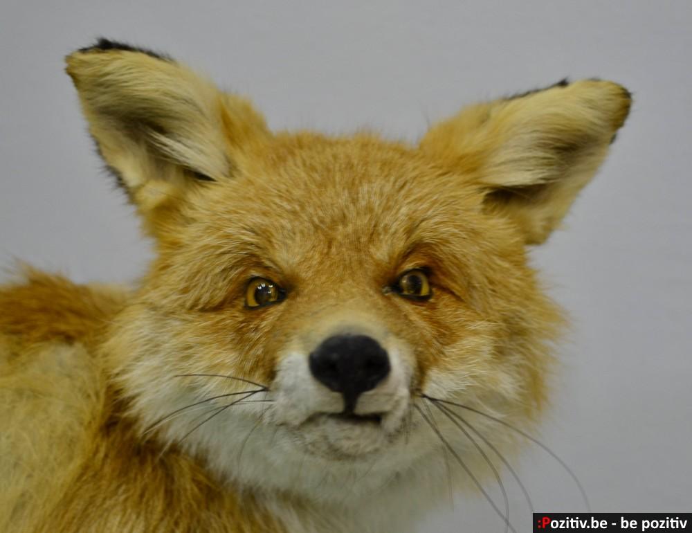 Лисица из музея Диканьки