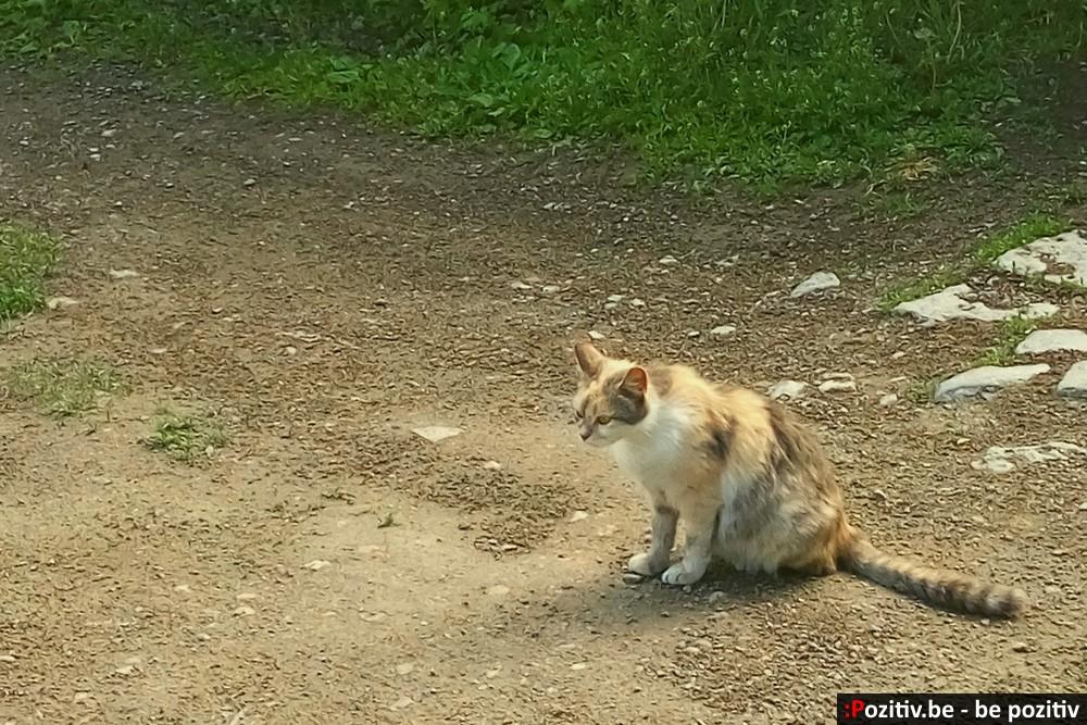 Каменец-Подольский, Старый город, кот