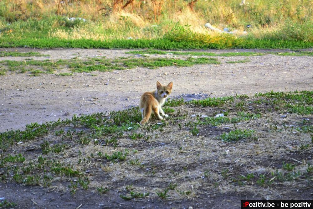 Геническ, коты, бродячие животные