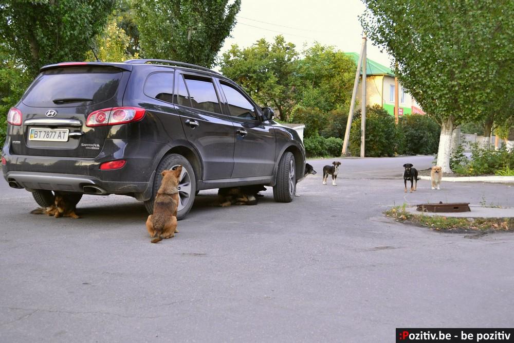 Геническ, собаки, бродячие животные
