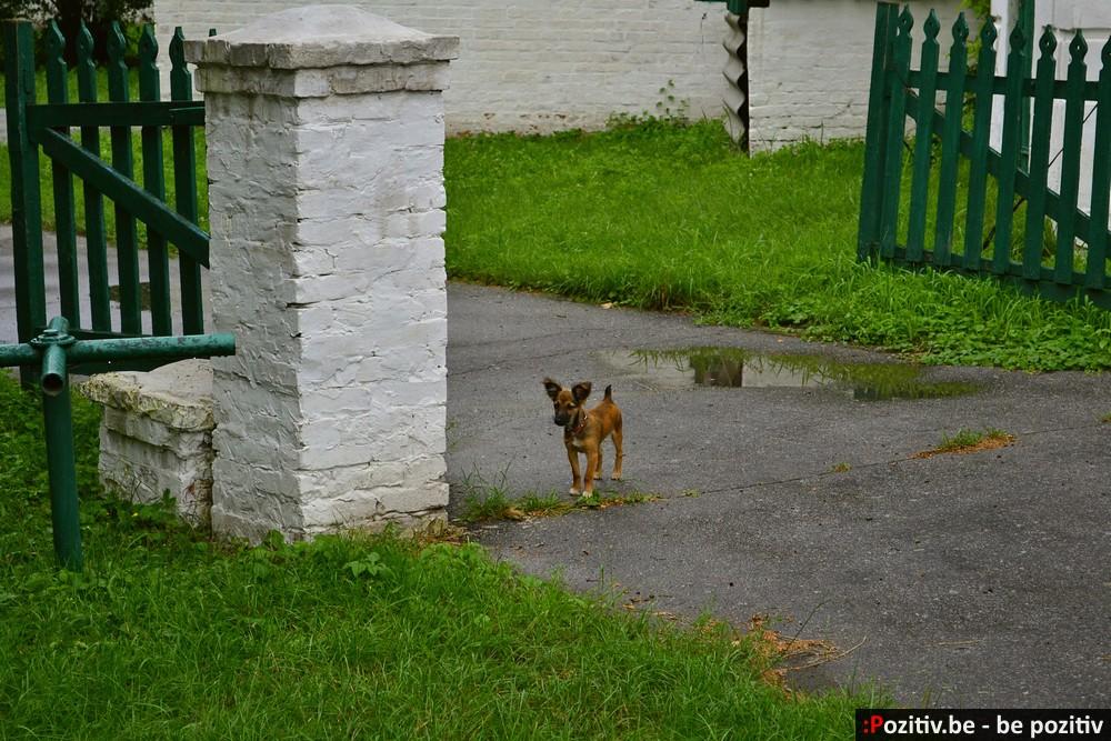 Сокиринский парк, злобный пёс