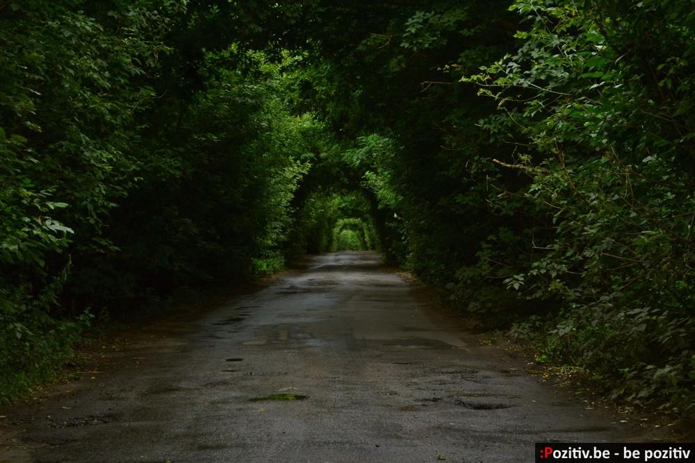 Черниговщина, челёный тоннель, тоннель любви