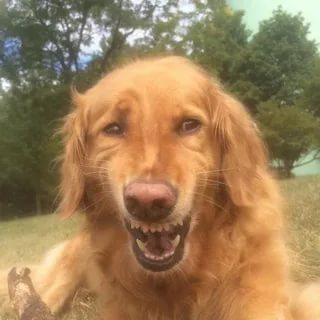 мем собака смеется